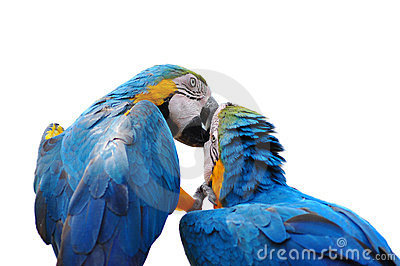 Colorful parrot love bird macaw