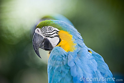Colorful parrot portrait