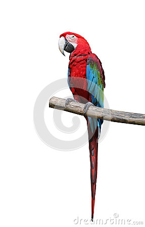 Colorful parrot saying.