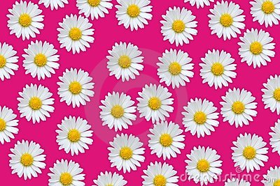 Colorful pattern with daisy flowers