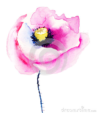 Colorful pink poppy flowers
