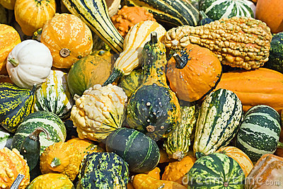 Colorful Pumpkins Stock Photography - Image: 10896092