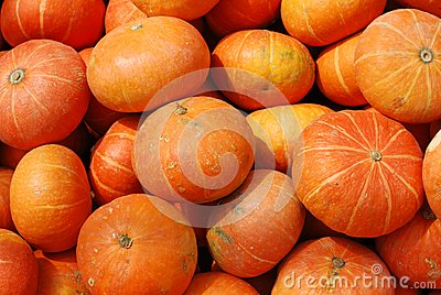 Colorful pumpkins collection backgroud