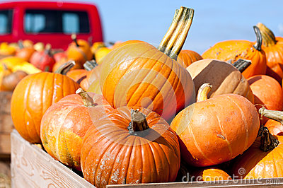 Colorful pumpkins at the farmer market