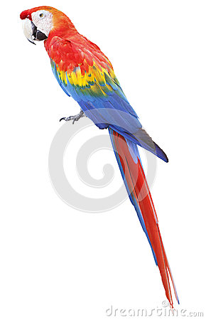 Free Colorful Red Parrot Macaw Stock Photography - 29851252
