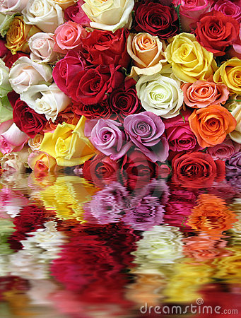 Free Colorful Roses Stock Images - 1886494