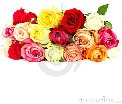 Colorful roses, beautiful flower bouquet on white