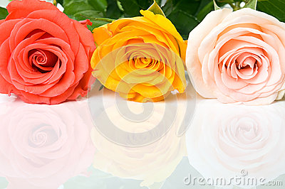 Colorful roses on the reflecting surface
