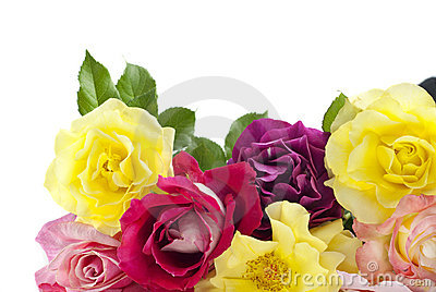 Colorful Roses White Background