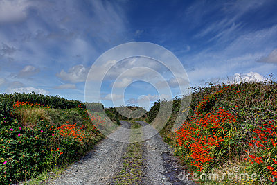 Colorful Rural Road, Ireland