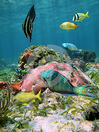 Colorful sea life in the Caribbean sea