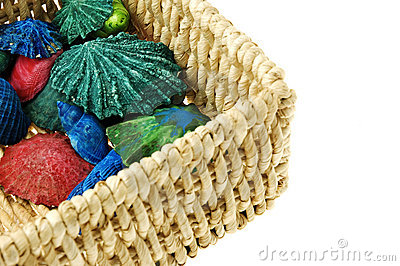 Colorful sea shells