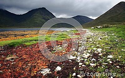 Colorful sea weed at lake
