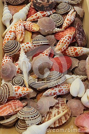Colorful Seashells - Nautilus Stock Photo