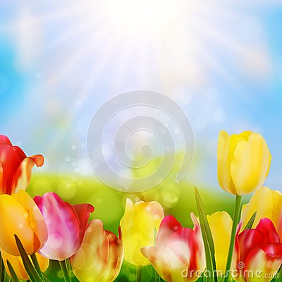 Free Colorful Spring Flowers Tulips. EPS 10 Royalty Free Stock Photos - 39579908