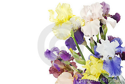Colorful Spring Irises