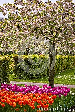 Free Colorful Springflowers In The Garden Keukenhof Royalty Free Stock Photos - 14857708