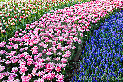 Colorful strokes of flowers