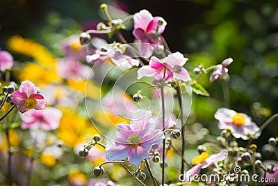 Colorful Summerflowers