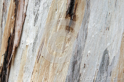 Textured Tree Trunk Bark Stock Photo