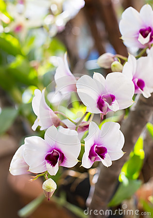 Colorful thai orchids
