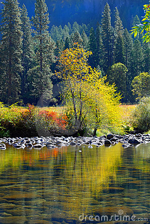 Free Colorful Tree And Foliage Reflecting Into The Merced River In Yo Stock Photography - 1436632