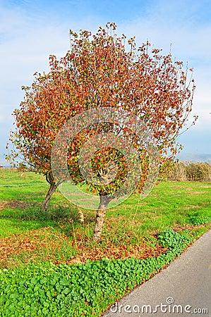 Colorful tree near path