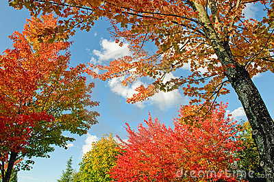 Colorful trees in autumn