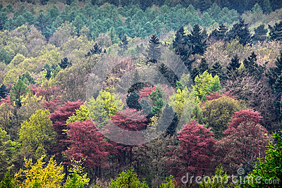 Colorful trees background