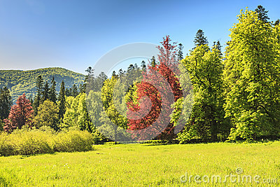 Colorful trees and green forest