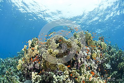 Colorful tropical coral scene in shallow water.