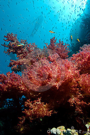 Colorful tropical reef and floral soft corals