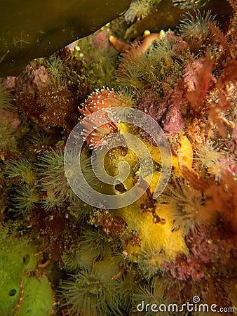 Colorful undersea flora