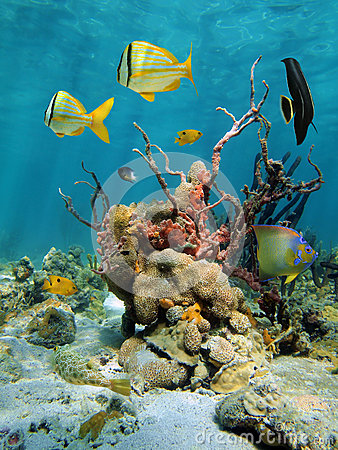 Colorful undersea view with corals and sea sponges