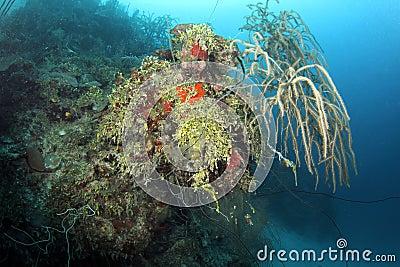 Colorful underwater coral scene, roatan, honduras