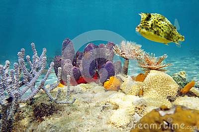 19 INCREDIBLY Colorful Sea Creatures - YouTube |Colorful Underwater Life
