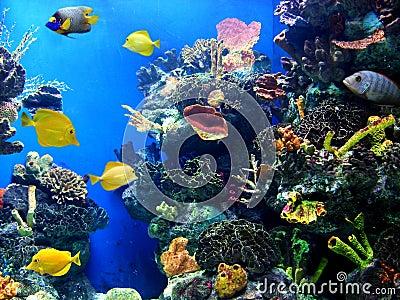 Colorful and vibrant aquarium life