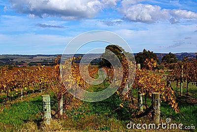 Colorful Vines, McLaren Vale