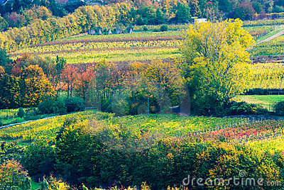 Colorful wine fields