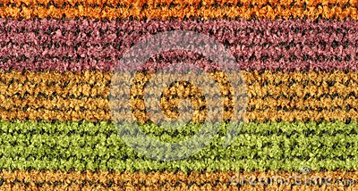 Colorful Woven Texture