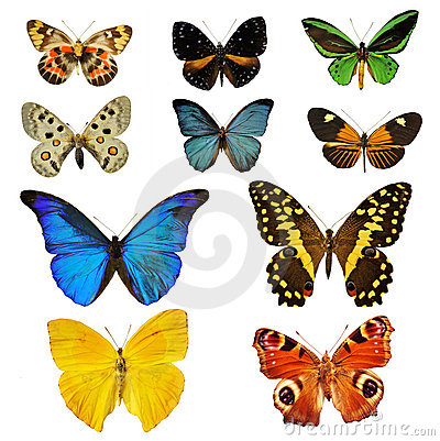 Free Colorfull Butterfly Stock Images - 17635964