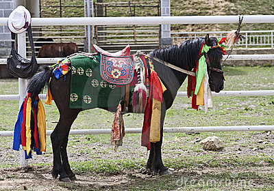 Colorfully Dressed Tibetan Horse