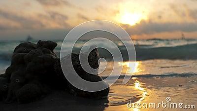 Colori straordinari del tramonto tropicale Barche a vela silhouette che galleggiano all'orizzonte oceanico Isola di Boracay, esta archivi video