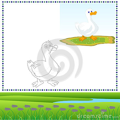 Coloring Duck