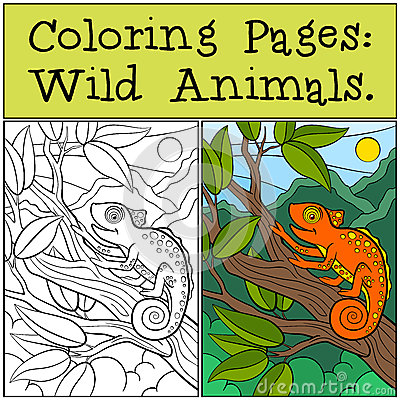 Free Coloring Pages: Wild Animals. Little Cute Orange Chameleon Sits Stock Image - 72190351