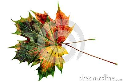 Colors of autumn #12
