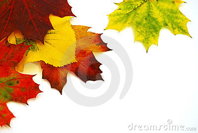 Colors of Autumn Leaves