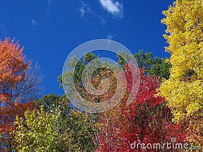 Colors of the Fall Season