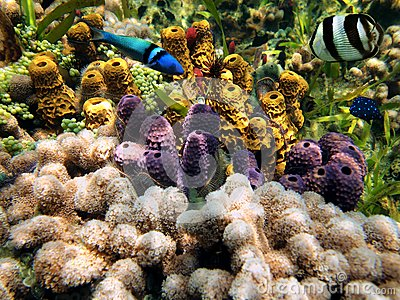 Colors of the sealife in the Caribbean sea
