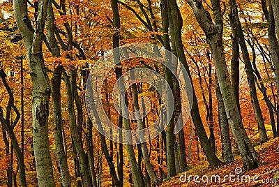 Coloured autumn